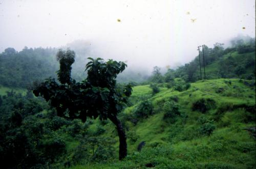Draft amendment to Forest Conservation Act may dilute protection to forests