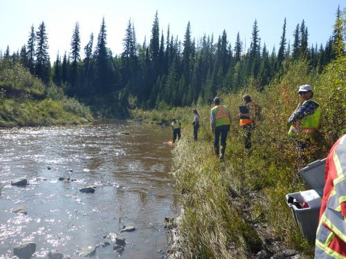 Healthy rivers: How DNA tool can help keep tabs on freshwater quality