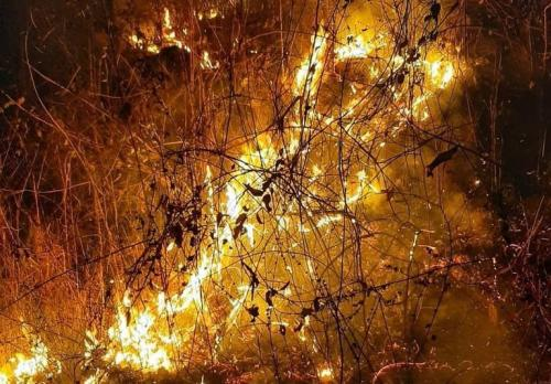 Similipal forest fire: It is time to act