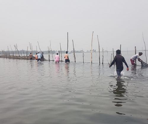 Over 15,000 hectares under illegal prawn enclosures: Chilika Development Authority