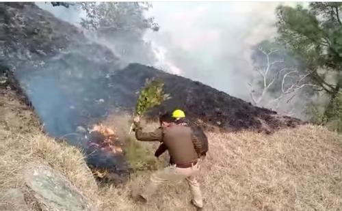 क्या उत्तराखंड के जंगलों को आग से बचा पाएंगे 10 हजार वन प्रहरी