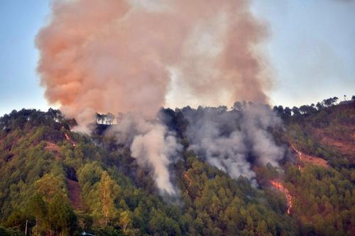 हिमाचल प्रदेश के जंगलों में भी लगी आग, अप्रैल में 100 से ज्यादा मामले दर्ज