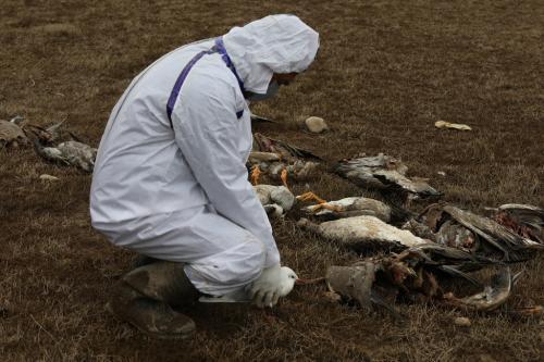हिमाचल प्रदेश में बर्ड फ्लू का नया रूप, 100 से अधिक पक्षियों की मौत