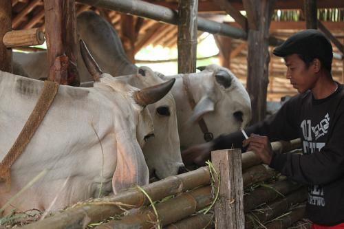 A two-week lockdown in Odisha has left as many as 1.5 million milk farmers in the lurch. Photo: hippopx