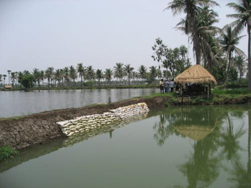 Why unbridled aquaculture in East Godavari district needs to be monitored