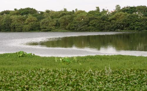 Karnataka revives dying lakes: Why a decentralised governance was long overdue
