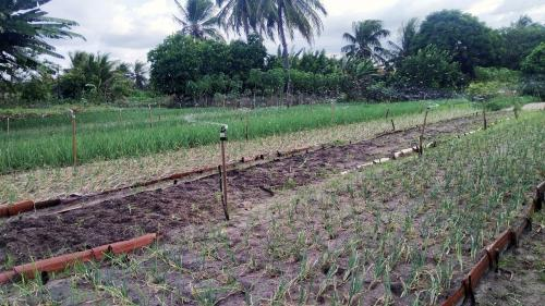 Pineapple agroforestry can help tackle climate change, biodiversity loss: Study