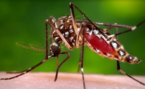 The world may soon get a vaccine against Chikungunya