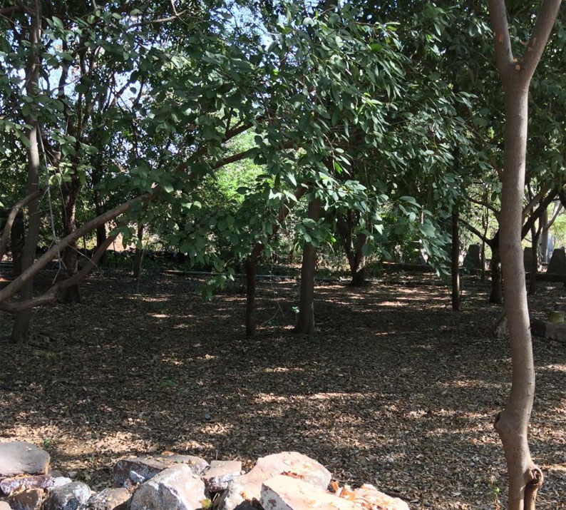 A sacred grove in Bhopal, India. Woods and sacred groves have featured as an integral part of our culture, religion and literature
