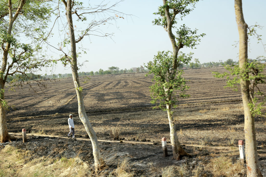 A tract of burnt land in Deoria district of Uttar Pradesh. Though burning crop residue is prevalent in several parts of the state, officially, only one case has been registered so far this year in Gautam Budh Nagar district (Photo: Srikant Chaudhary)