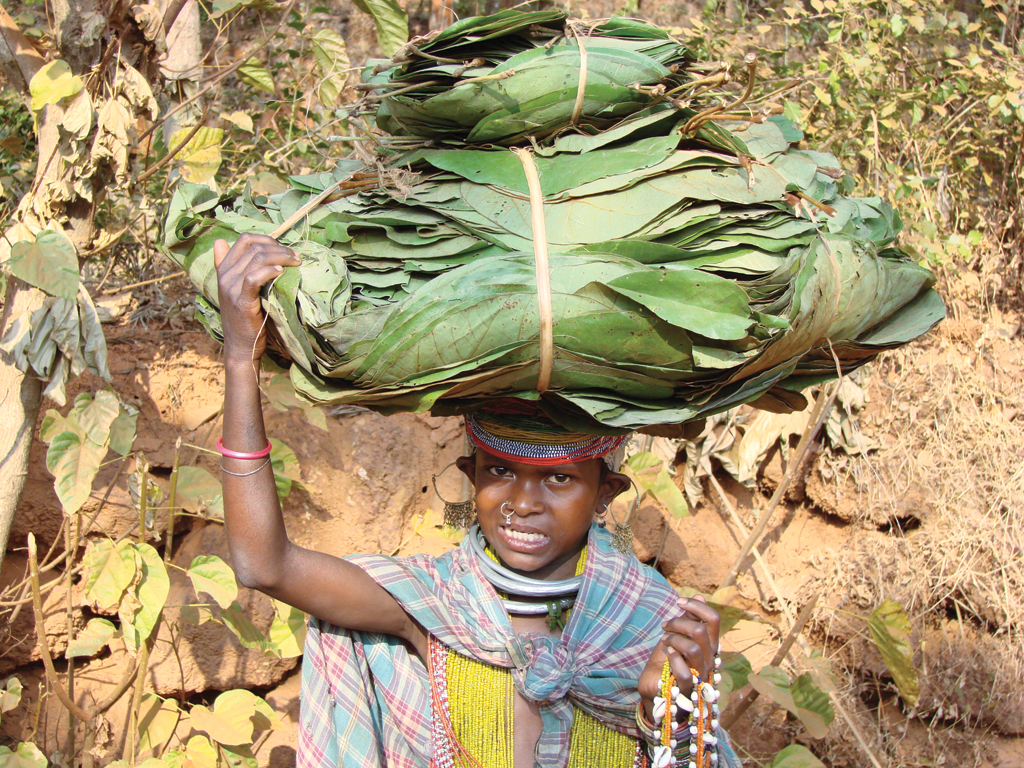 The income of tribal communities of Kalahandhi district, Odisha, increased three-fold once their right to sell tendu leaves to traders of their choice was recognised under the Forest Rights Act  (Photo: Vikas Choudhary)