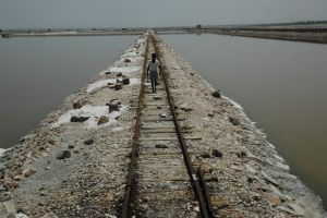 NCCS scientists find new microbial species in Sambhar lake