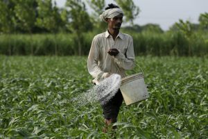 Union Budget 2020-2021 suggests balanced use of all kinds of fertilisers