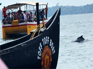 The dolphin sighting boats at Sinquerim bay (above); of the 83 cetaceans found in the world (Source: ISHIKA RAMAKRISHNA / WWF INDIA)