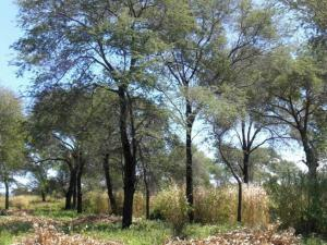 Integrating trees in African agricultural landscapes