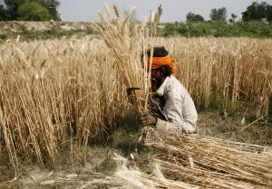 Transformation in agriculture needed to cope with climate change