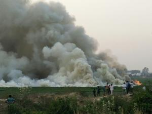 Bellandur Lake: a story of toxic froth and fire