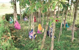 एक अक्टूबर 2016 को बड़कागांव में पुिलस फायरिंग के बाद गांव की महिलाओं ने पेड़ों की ओट में छिपकर अपनी जानें बचाईं (फोटो : प्रीति सिंह)