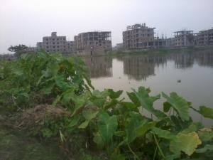 the East Kolkata Wetland was listed as a Ramsar site in 2002 (Photo: Pravash Mallick/Creative Commons)