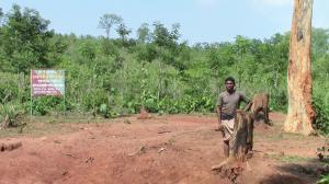 ओडिशा के पिडिकिया गांव में वन अधिकारियों ने फरवरी में वनाधिकार के तहत आने वाली 300 हेक्टेयर सामुदायिक भूमि पर 60,000 टीक के पौधे रोप दिए (लक्ष्मीधरा मुर्मू)