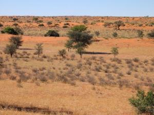 Sub-Saharan Africa lost 2.6bn tonnes of carbon stock due to climate change
