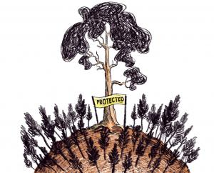 If we really want to save the Himalayan oak, we should not chop them for developmental activities