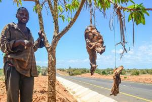 Why poachers persist in hunting bushmeat - even though it's dangerous