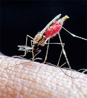 The incidence of malaria has shot up in the past 60 years as tropical