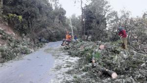 ऋषिकेश- धरासू मार्ग पर ही हजारों पेड़ काटे जा रहे हैं जिसका काफी भाग नरेन्द्रनगर वन प्रभाग के अंतर्गत आता है (फोटो: अरविंद बिजलवान)