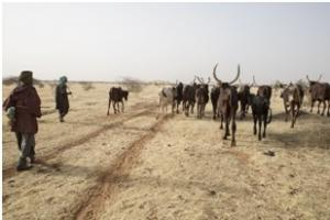 Herders take their animals to water in Niger. Credit: FAO