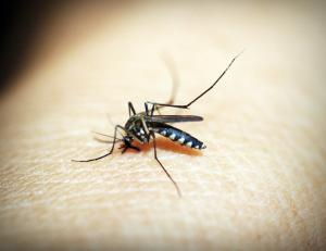 In 2016, the WHO had identified 21 countries where they could eliminate malaria by 2020. Credit: 41330/Pixabay