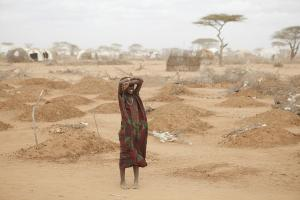 Africa must be proactive about drought, not reactive, says FAO