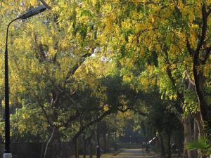 Delhi tree felling: Absent forest policy, absentee Tree Authority