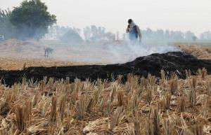 Crop residue burning in North affecting rest of India too: study