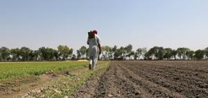 Why MSP will not provide even minimum support to farmers
