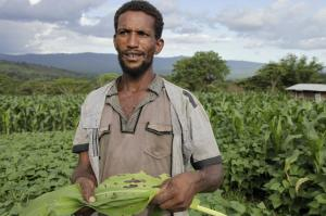 300 million sub-Saharan Africans could go hungry due to Fall Armyworm
