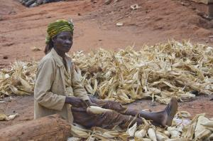 Over the next decade, demand for cereals to grow only in low-income regions