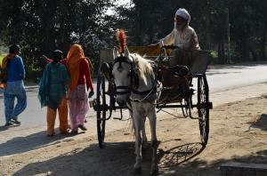Decoding Uttarakhand HC's judgment on animal rights