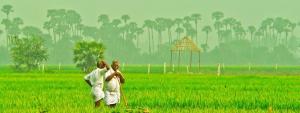 Farmer producer organisations need their very own Amul
