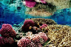Coal reefs and marine heatwaves