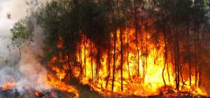 Drought and Australia wildfire