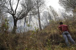 जंगल में आग के लिए कौन जिम्मेवार