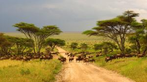 Over 70% of Africa's grazing land is facing degradation due to invasive plant species