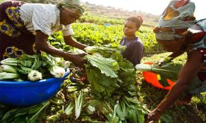 Limited access to land and water affects productivity of women farmers in Africa