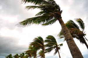 "IMD calls Titli, Luban cyclones ""rarest of rare"" occurrences"