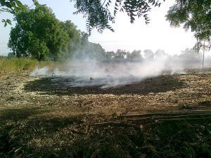 आईआईटी के छात्रों ने दिखाया पराली प्रदूषण से मुक्ति का रास्ता