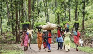 'Gender differences in internal migration patterns decrease as countries develop'