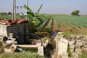 Agriculture sector not responsible for discoms' health, declining groundwater: study