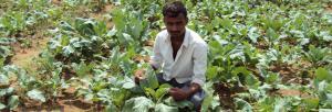 Promoting input-based enterprises to spread organic farming