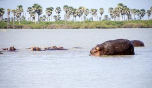 'Selous Game Reserve dam rooted in geopolitics over Nile'
